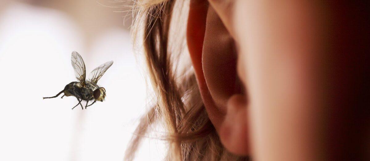 Ваши действия, если что-то попало в ухо. - Фото №1